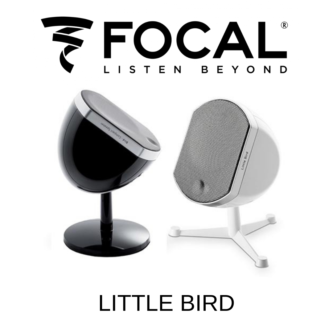 Focal Little Bird